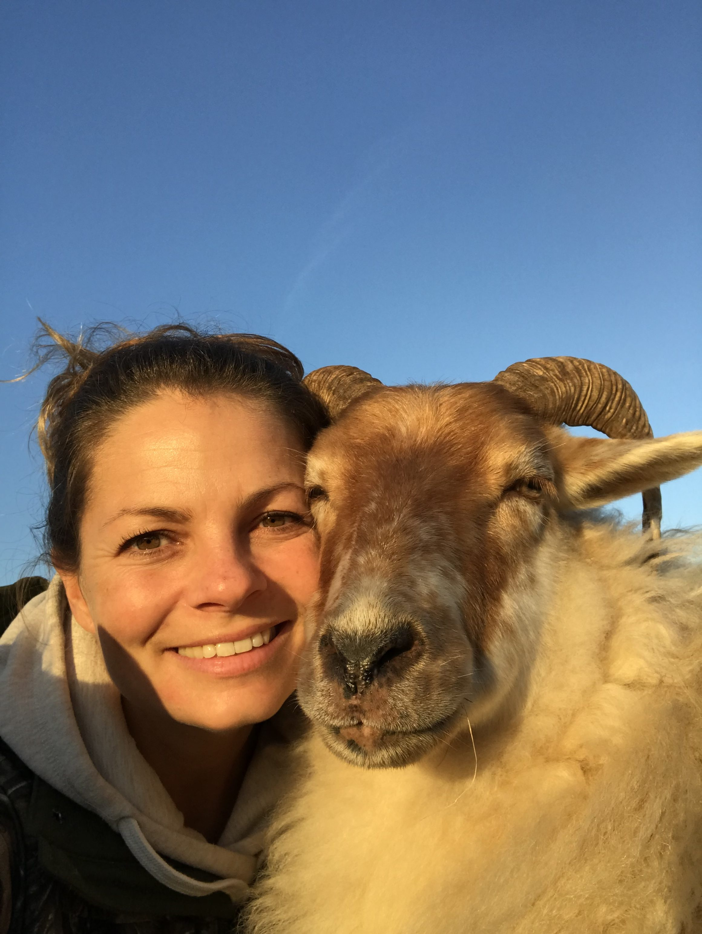 schapen herkennen gezichten