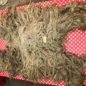 natalie wool - ruwe wol A