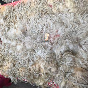 Natalie wool - ruwe wol B