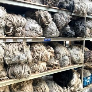 natalie wool - wolmuur