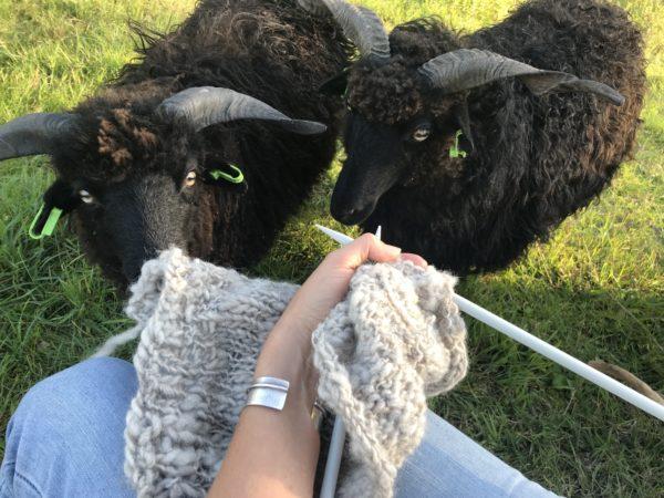natalie wool- drents heide kaardvlies